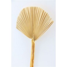 DRIED PALM SPEAR ROUND BLEACHED