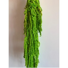 PRESERVED AMARANTHUS - BRIGHT GREEN
