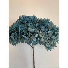 DRIED HYDRANGEA - LIGHT BLUE