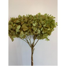 DRIED HYDRANGEA - GREEN