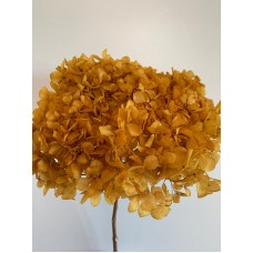 DRIED HYDRANGEA - MUSTARD YELLOW