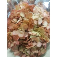 PRESERVED HYDRANGEA - CLASSIC RED GREEN