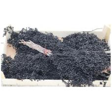 SCHINUS MOLL - BLACK