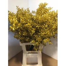 PRESERVED RUSCUS ACULEAT - GOLD GLITTER