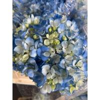 HYDRANGEA S-COLLECTION DARK BLUE