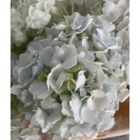 HYDRANGEA S-COLLECTION MINT GREEN