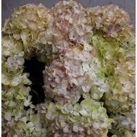 HYDRANGEA S-COLLECTION PREMIUM -  SPECKLED EGG
