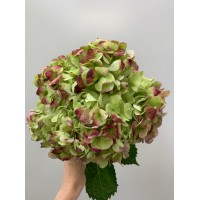 HYDRANGEA S-COLLECTION ANTIQUE
