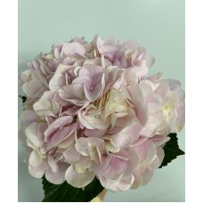 HYDRANGEA K-BCOLLECTION FORCE PINK