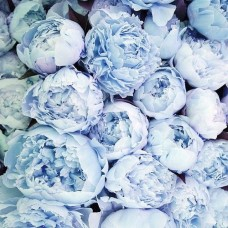 PEONY - BLUE DYED