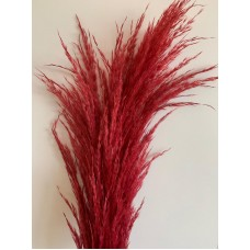 PRESERVED PAMPAS - BLOOD RED