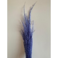 PRESERVED PAMPAS - LILAC