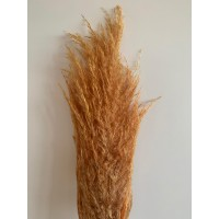 PRESERVED PAMPAS - RUSTIC