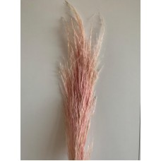 PRESERVED PAMPAS - BABY PINK
