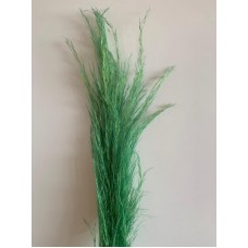 PRESERVED PAMPAS - DARK GREEN