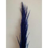 PRESERVED PAMPAS - ROYAL BLUE