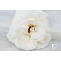 WHITE O'HARA 40cm