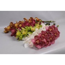 CYMBIDIUM ORCHIDS MIX
