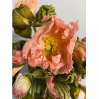 PAPAVER - LIGHT PINK