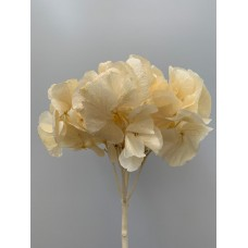 PRESERVED HYDRANGEA - BLEACHED