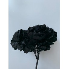PRESERVED HYDRANGEA - BLACK