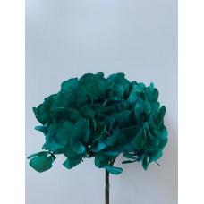 PRESERVED HYDRANGEA - EMERALD GREEN