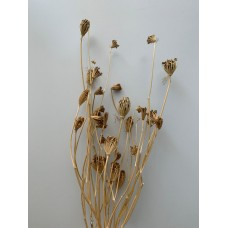 DRIED FENNEL - NATURAL