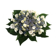 HYDRANGEA S-COLLECTION WHITE BLUE