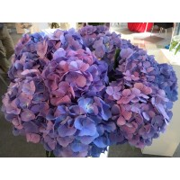 HYDRANGEA K-COLLECTION CANDY FLOSS BLUE/PURPLE
